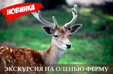 """Эксклюзивная экскурсия """"Оленья ферма"""""""