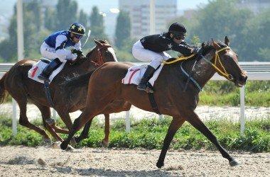 Кубок Российских конных заводов, фестиваль Heritage Arabian Racung Club (HARC)